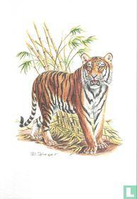 Zoogdieren - Bengaalse tijger