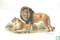Zoogdieren - Leeuw