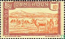 Herd in river