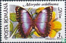 Morpho achilleana