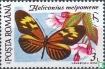 Heliconius melpomene