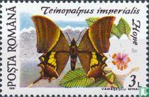 Teinopalpus imperialis