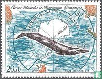 Walvisreservaat van de Zuidelijke Oceaan