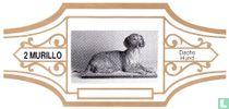 Dachs Hund