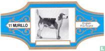 English fox hound