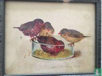 vier vogels bij voederbak