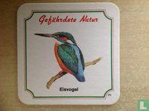 30 Gefährde Natur/Eisvogel