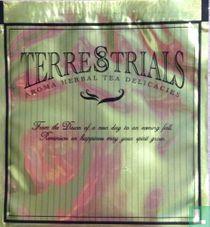 Aroma Herbal Tea Delicacies