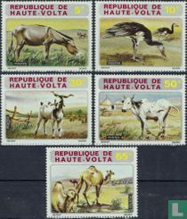 Native Animals