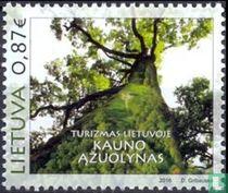 Oak forest of Kaunas