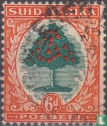Sinaasappelboom (Afrikaans) kopen