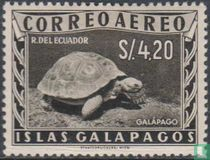 Galapagoseilanden Schildpad