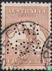 Känguru, mit perforation