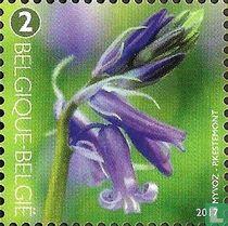 Bloeiende wilde hyacint