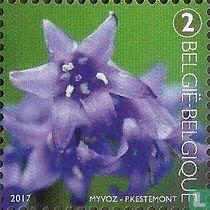 Bloemdek van de wilde hyacint