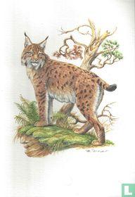 Zoogdieren - Lynx