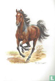 Zoogdieren - Paard