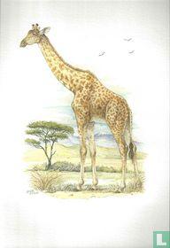 Zoogdieren - Giraffe
