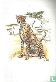 Zoogdieren - Jachtluipaard