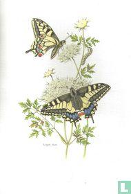 Insecten - Koninginnenpage