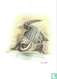Reptielen - Nijlkrokodil