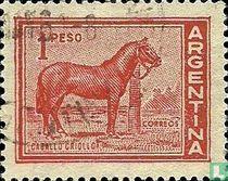 Creools paard