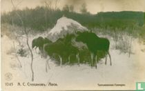 Elanden in de sneeuw