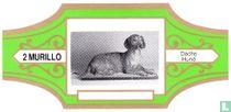 Dach's Dog