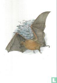 Zoogdieren - Vliegende vos