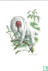 Zoogdieren - Witte oeakari