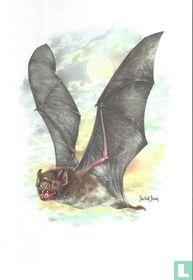 Zoogdieren - Gewone vampier