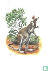 Zoogdieren - Witwangwallaby