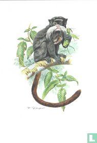 Zoogdieren - Keizertamarin