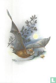 Zoogdieren - Rosse vleermuis