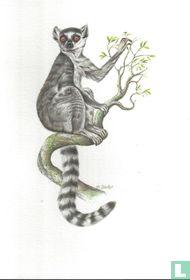 Zoogdieren - Katta