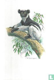 Zoogdieren - Indri