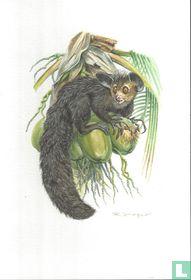 Zoogdieren - Vingerdier