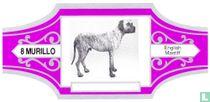 English Mastiff