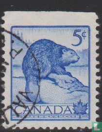 Canadese bever