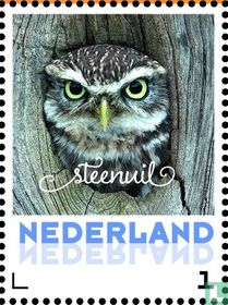 Steenuil