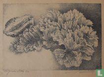 Stilleven met schelp en koraal