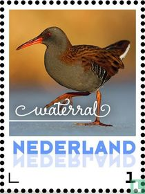 Wintervogels - Waterral