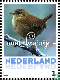 Wintervogels - Winterkoninkje