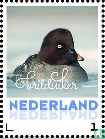 Wintervogels - Brilduiker