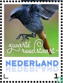 Lentevogels - Zwarte roodstaart