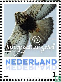 Wintervogels - Ruigpootbuizerd
