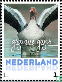 Wintervogels - Grauwe gans