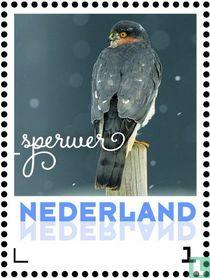 Wintervogels - Sperwer