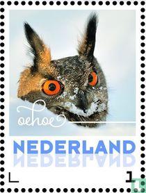 Wintervogels - Oehoe