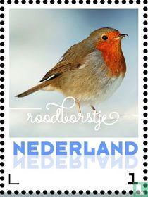 Wintervogels - Roodborstje